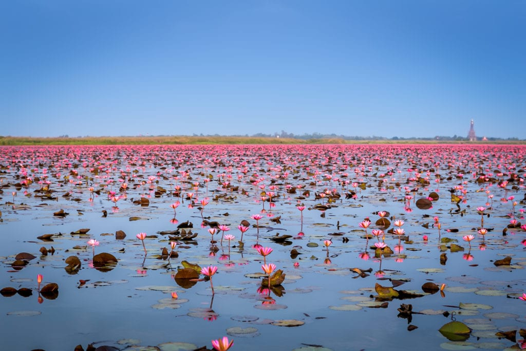 Udon Thani, Red Lotus Sea