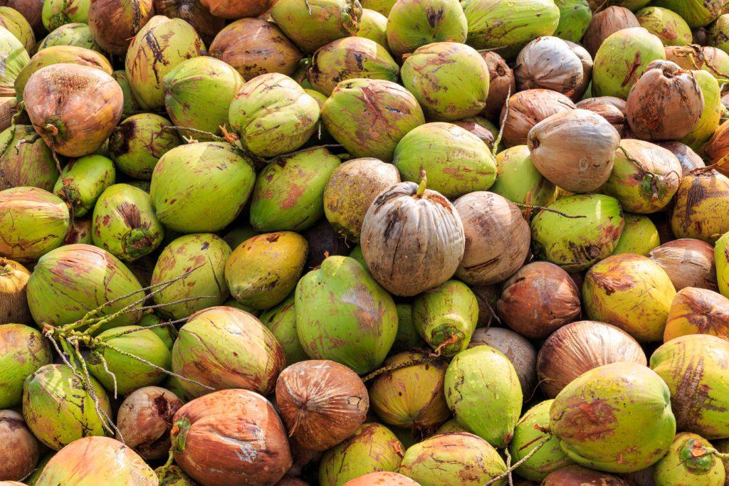 Coconut Farm in Kao Sam Roi Yot National Park